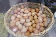 Kırklareli Organik Köy Yumurtası